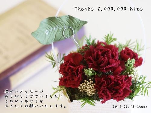 flower42_800x600.jpg